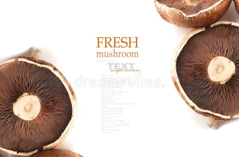 Download Большой плоский гриб стоковое фото. изображение насчитывающей плоско - 41658524