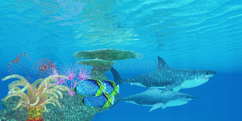 Большой риф белой акулы иллюстрация штока