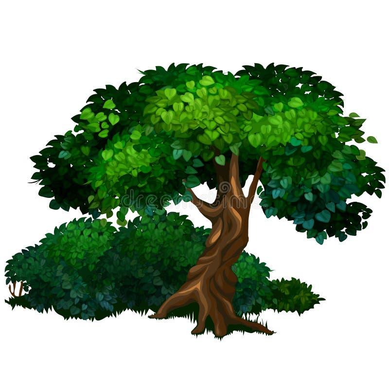 Большой дуб дерева Природа, лес, концепция экологичности иллюстрация вектора