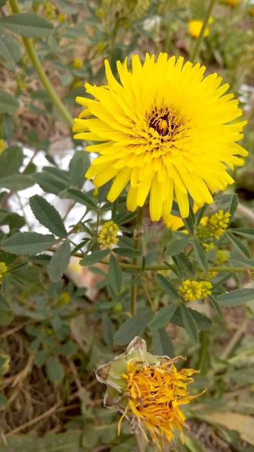 Большой цветок в саде стоковая фотография