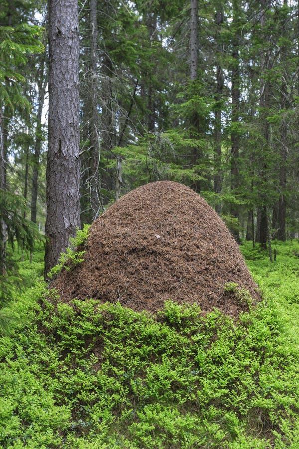 Большой anthill стоковые фотографии rf