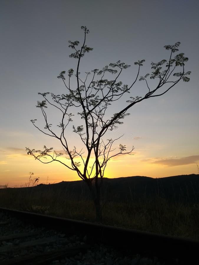 Бразильянин Cerrado стоковое фото rf
