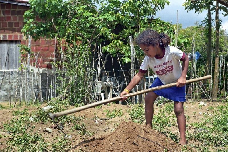 Бразильская девушка работая в натуральном сельском хозяйстве стоковое фото
