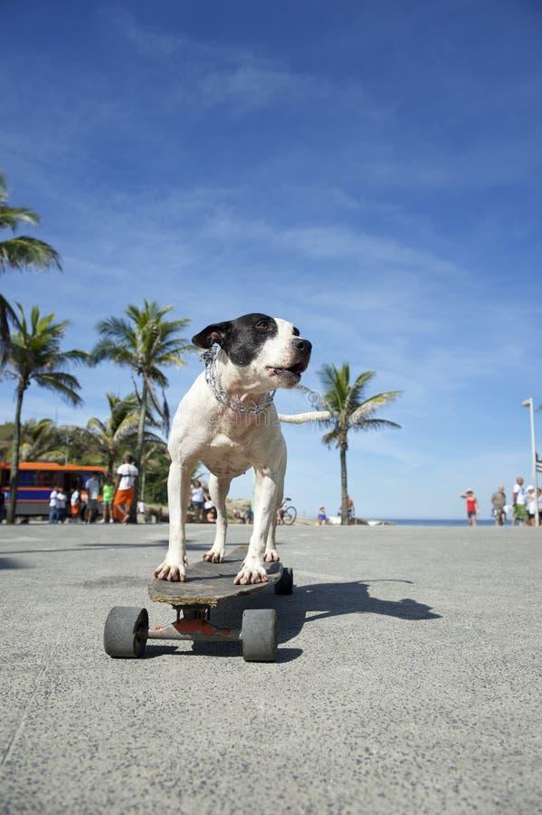 Бразильский скейтборд Рио-де-Жанейро Бразилия катания собаки стоковая фотография