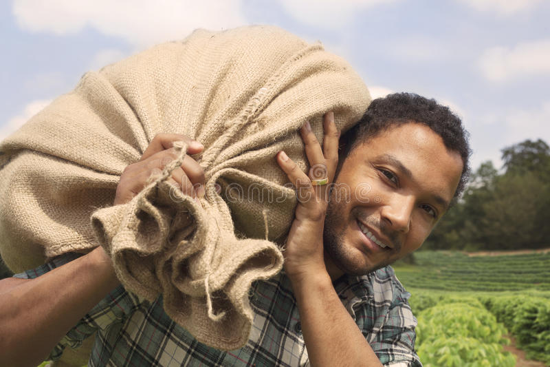 Бразильский фермер кофе на кофейной плантации стоковое фото rf