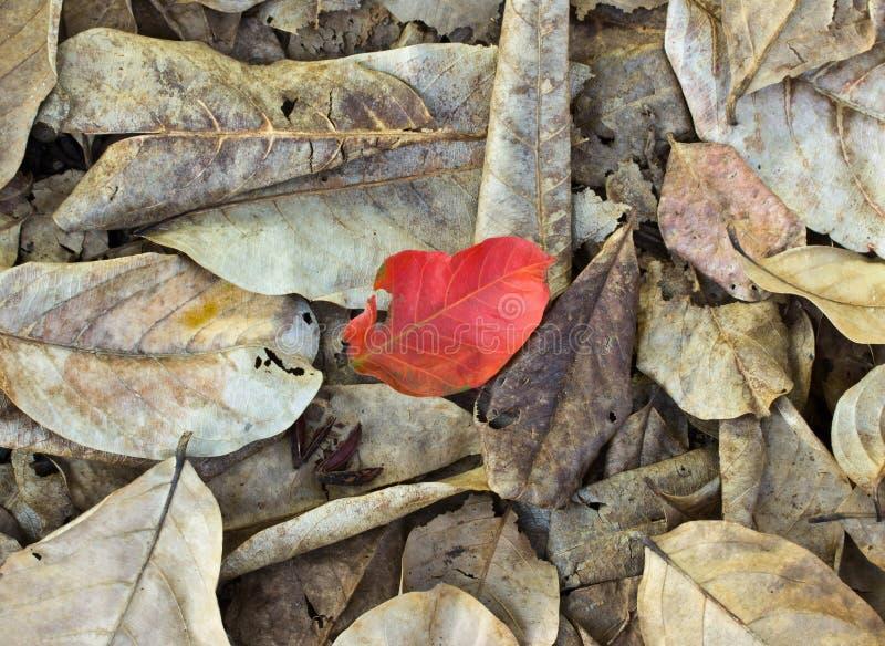 Брайн и красные упаденные листья стоковые изображения rf