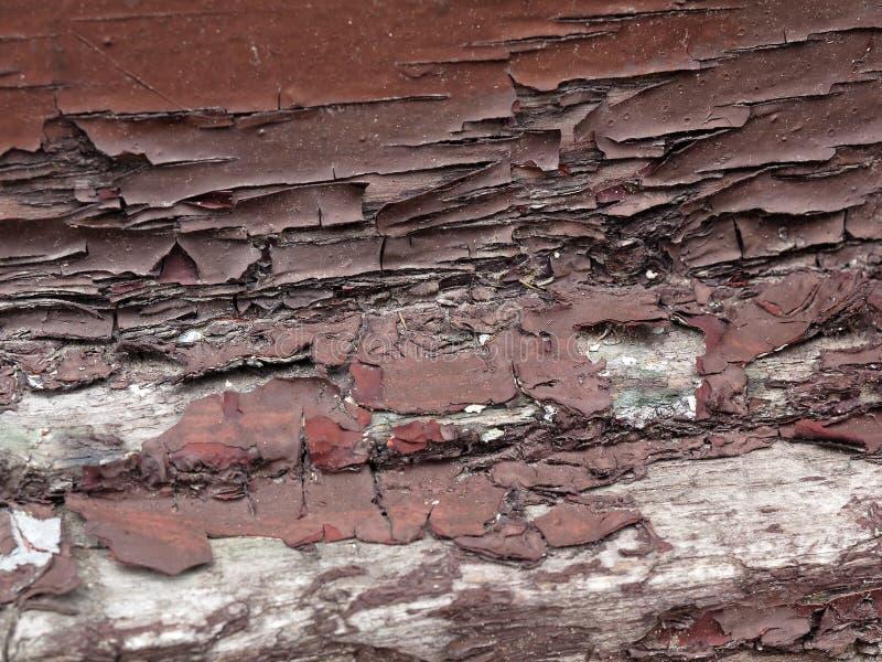Брайн откалывая краску на древесине стоковая фотография