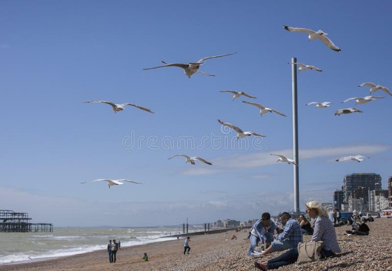 Брайтон, Англия, Великобритания - люди имея потеху на пляже и чайках стоковые фотографии rf