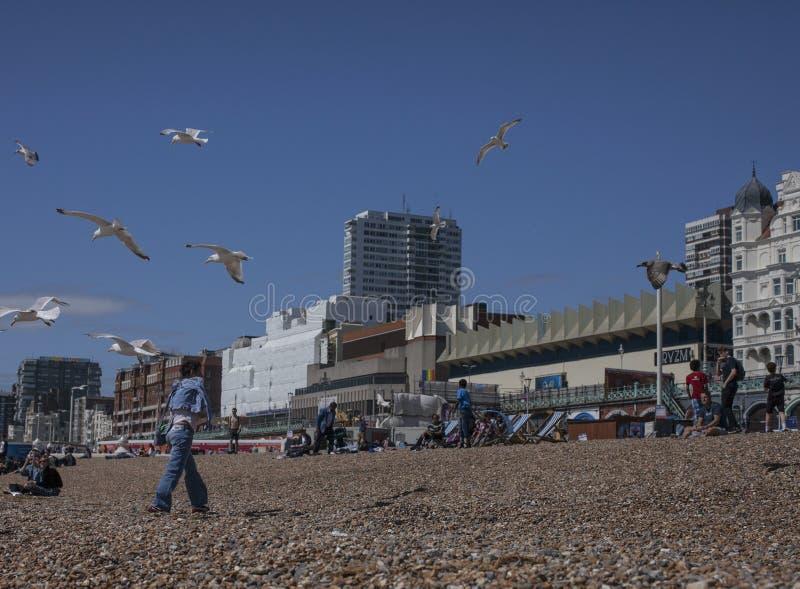 Брайтон, Англия - люди имея потеху на пляже и чайках стоковые фото