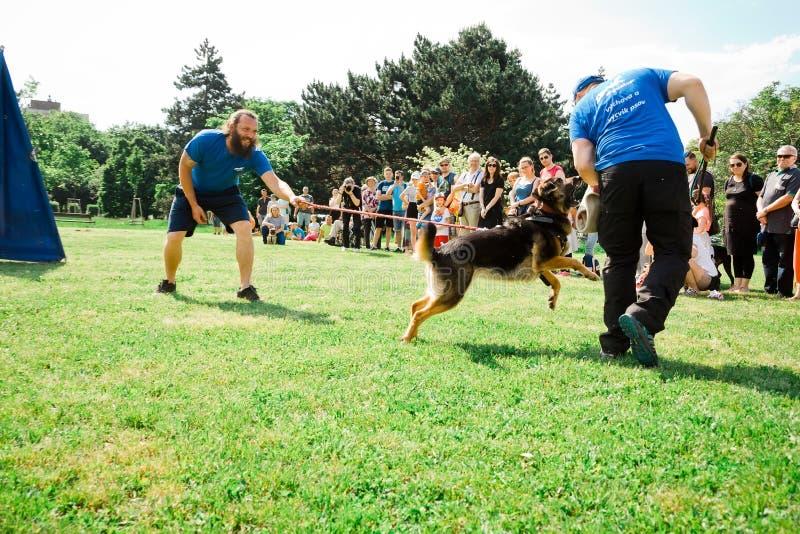 Братислава, Словакия - 2-ое июня 2019: Самая лучшая собака Ruzinov стоковые изображения rf