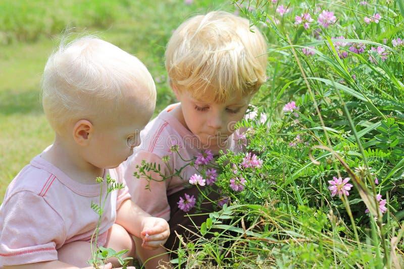 Братья выбирая цветки стоковое изображение