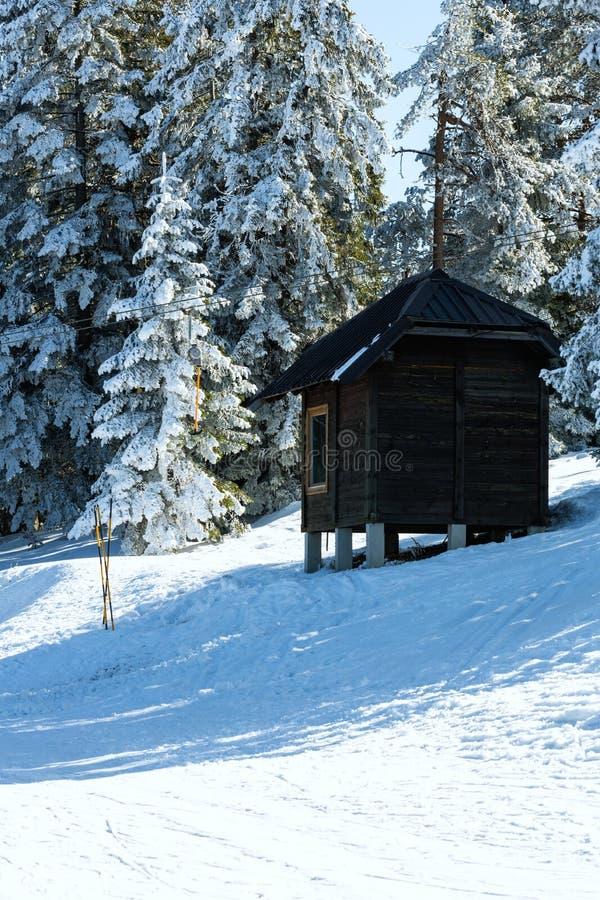 Бревенчатая хижина, укрытие среди сосен покрытых снегом в mou зимы стоковое фото rf