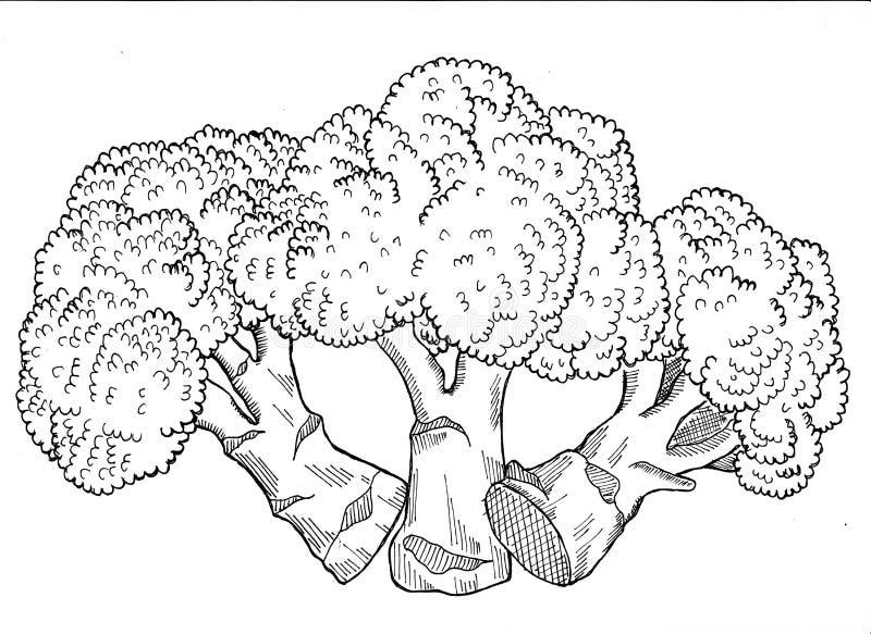 Брокколи Handdrawn иллюстрация вектора