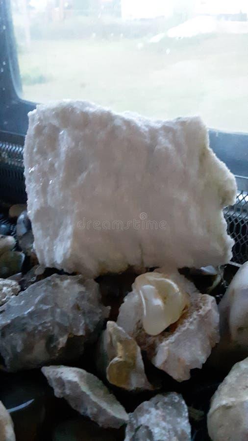 Бромид Tribolites стоковые фотографии rf