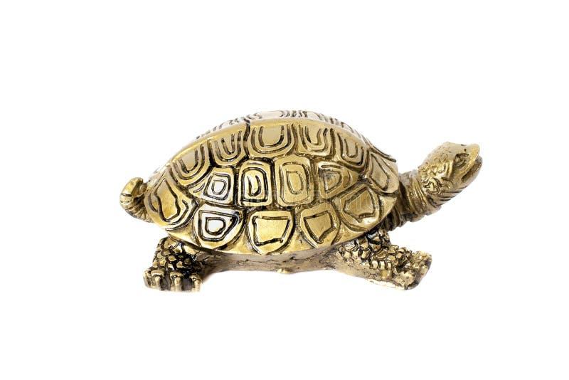 Бронзовая черепаха изолированная на белой предпосылке стоковые изображения rf