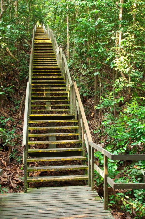 бросьте вызов деревянное лестницы крутое стоковая фотография