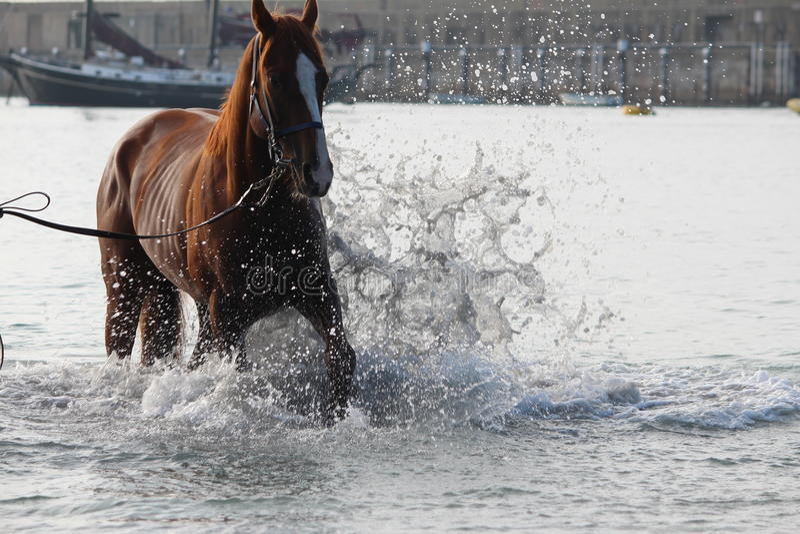 Брызгать лошадь стоковые изображения rf