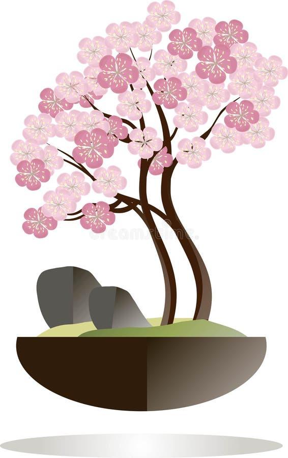 буг Зацветая дерево Сакуры в черном баке на белой предпосылке Розовые цветки, коричневые ветви иллюстрация штока
