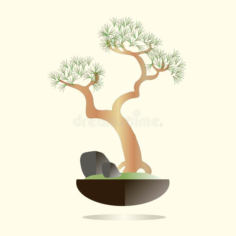 буг Сосна в черном баке на свете - розовая предпосылка Зеленые иглы, коричневые ветви, серые камни, зеленая трава иллюстрация штока
