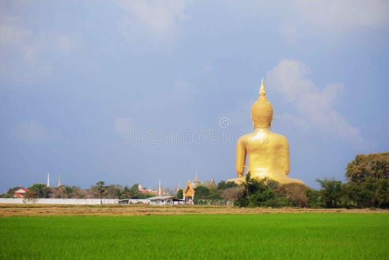 Будда на поле риса стоковая фотография