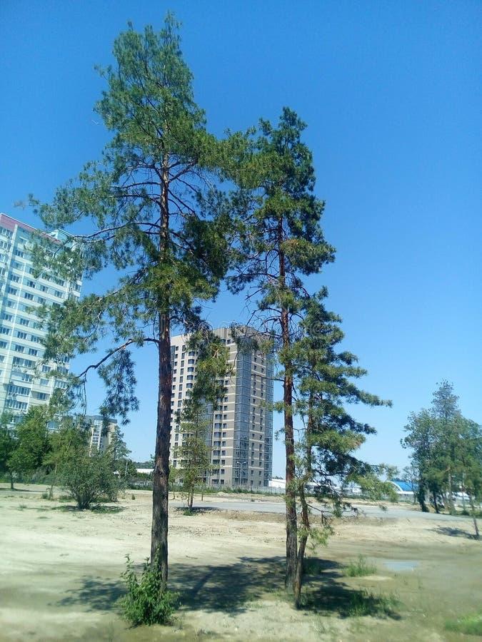 Будущий парк перед жилыми домами стоковое изображение