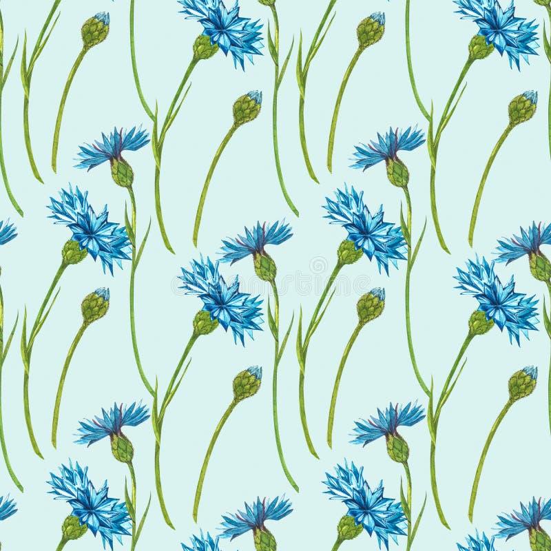 Букетный букет 'Синий цветочный травяной травы' или 'холостяк', изолированный на белом фоне Комплект изобразительных цветов, цвет стоковые изображения rf