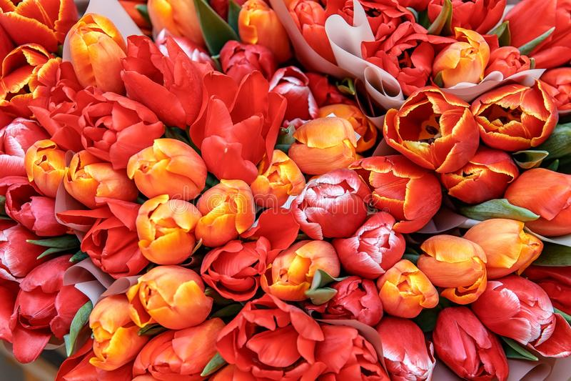 Букеты красных, желтых подарков тюльпанов для женщин стоковое изображение