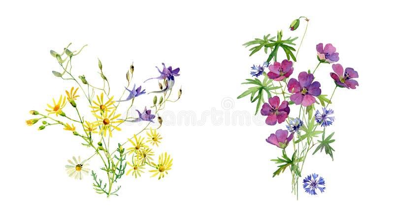 Букет 2 акварелей полевых цветков иллюстрация вектора