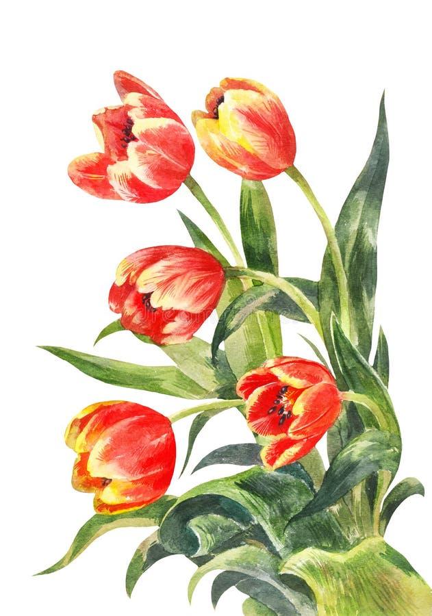 Букет акварели красных тюльпанов сбор винограда милой иллюстрации птиц установленный бесплатная иллюстрация