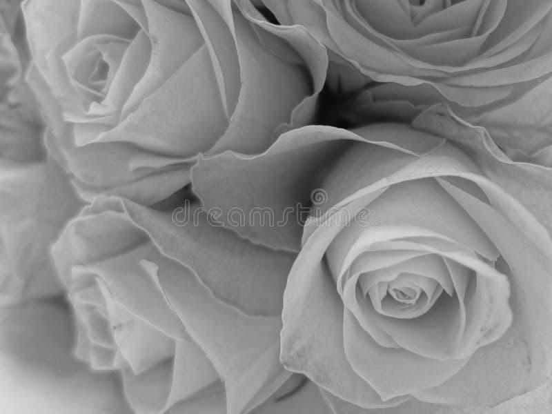 Букет белых роз в черно-белом стоковая фотография rf