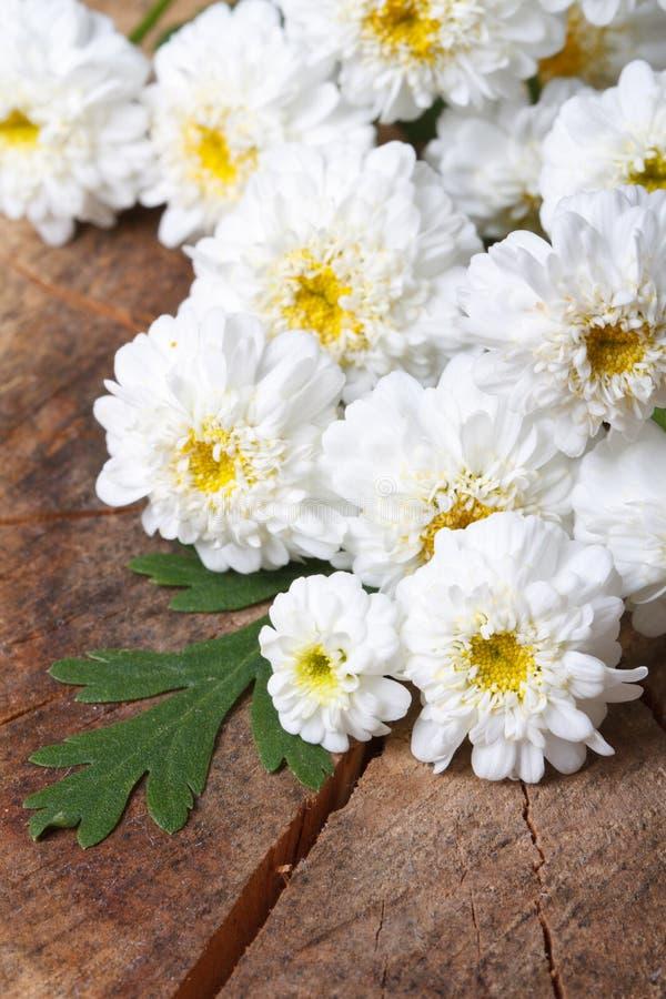 Download Букет белого мини конца-вверх хризантем Стоковое Изображение - изображение насчитывающей цветок, floret: 41651067