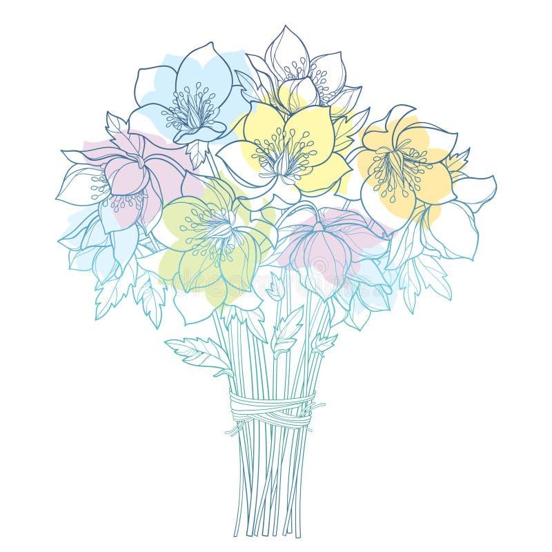 Букет вектора с изолированными морозником плана или Helleborus или Lenten розой, бутоном и листьями в пастельные голубом, зеленый бесплатная иллюстрация