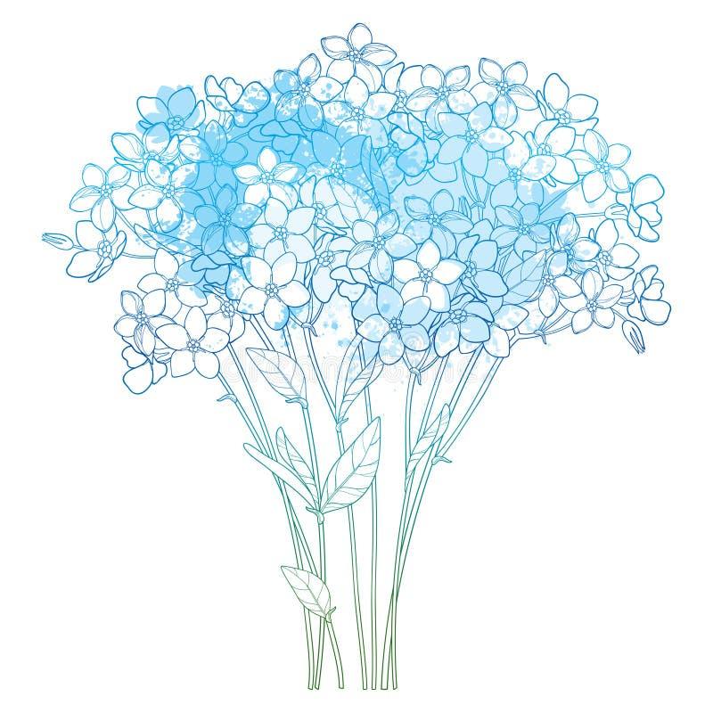 Букет вектора с планом забывает меня не или цветка Myosotis пук, бутон и лист в пастельной сини изолированной на белой предпосылк бесплатная иллюстрация