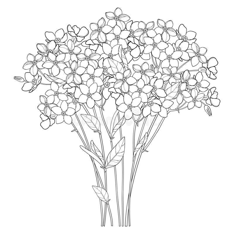 Букет вектора с планом забывает меня не или цветка Myosotis пук, бутон и лист в черноте изолированные на белой предпосылке бесплатная иллюстрация