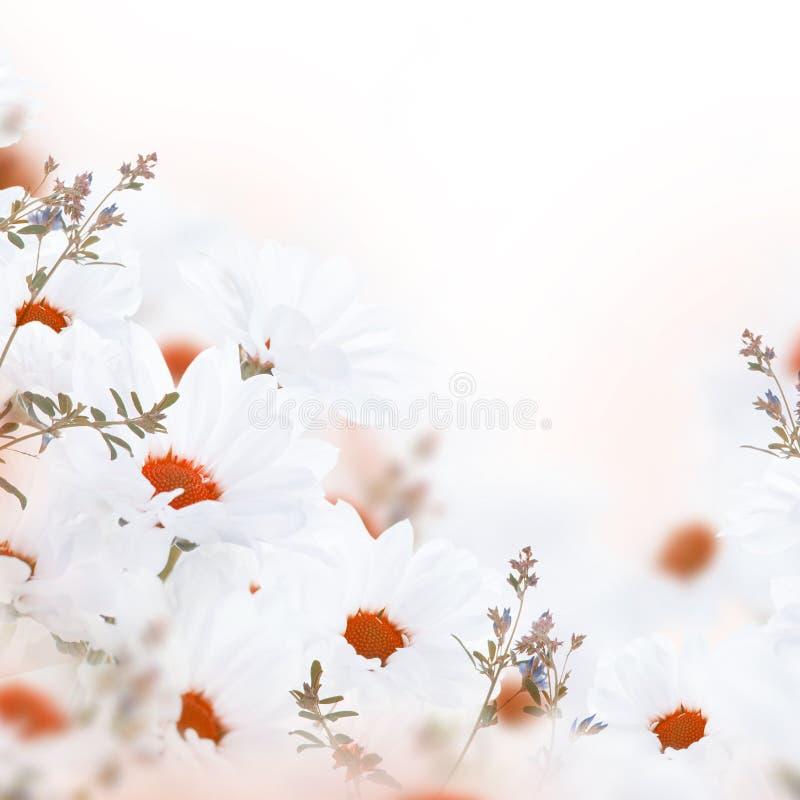 Download Букет весны маргариток стоковое изображение. изображение насчитывающей карточка - 40579949