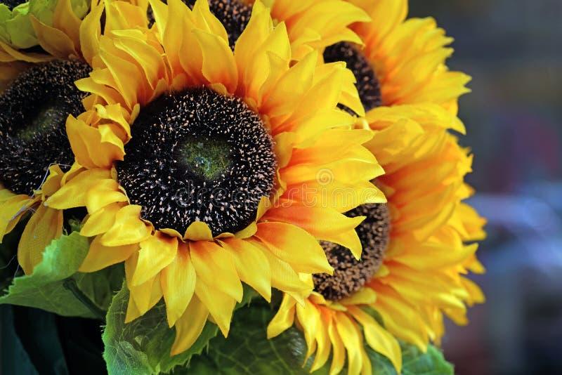 Букет декоративно-желтых цветов подсолнечника стоковые фото