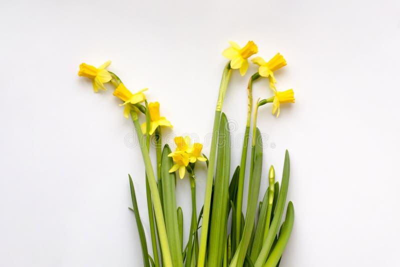 Букет желтых daffodils или narcissus стоковые изображения