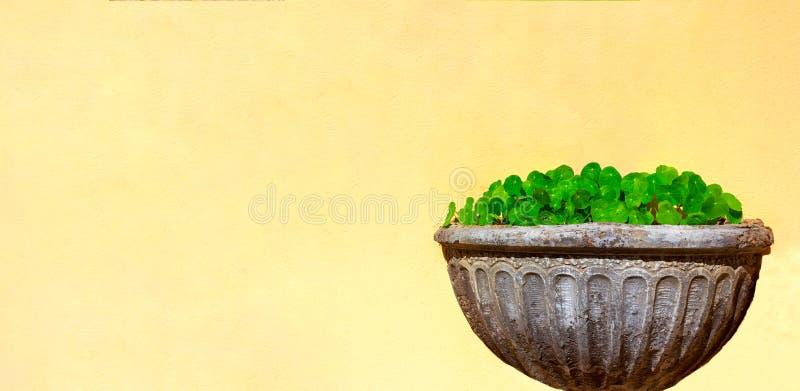 Букет зеленых цветков в каменной вазе на желтой стене стоковые изображения rf