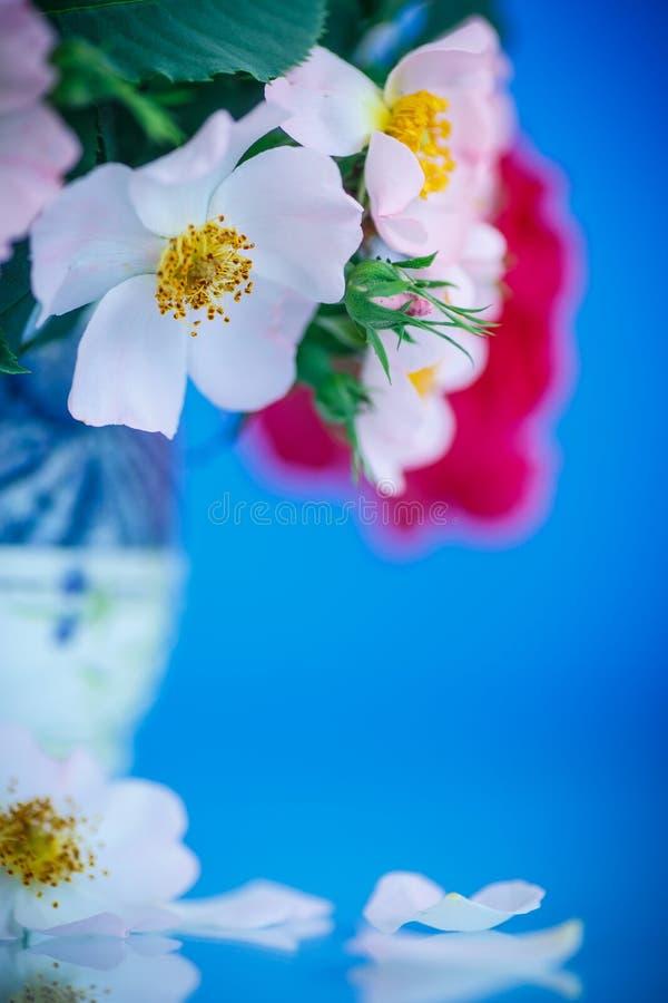 Букет красивых одичалых роз стоковая фотография rf