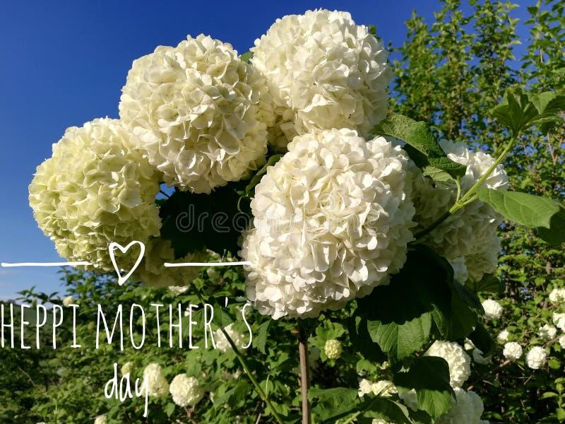 Букет красивых цветков на День матери стоковые изображения rf