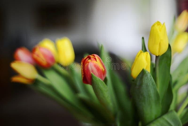 Букет красных и желтых тюльпанов стоковая фотография rf