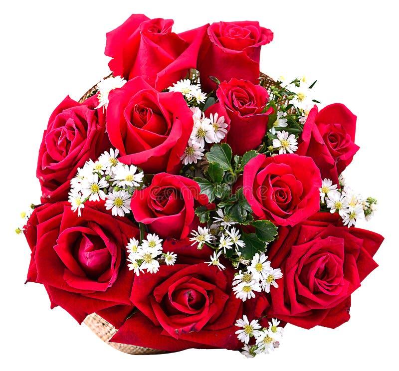 Букет красных роз изолированных на белой предпосылке стоковые фотографии rf