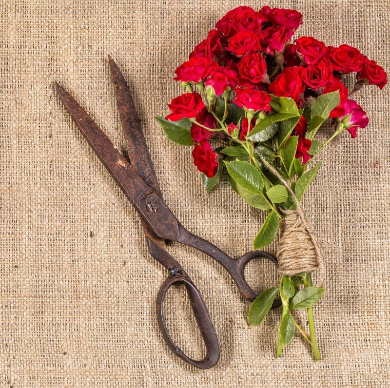 Букет красных роз и старых ржавых ножниц на деревенской предпосылке джута стоковые изображения