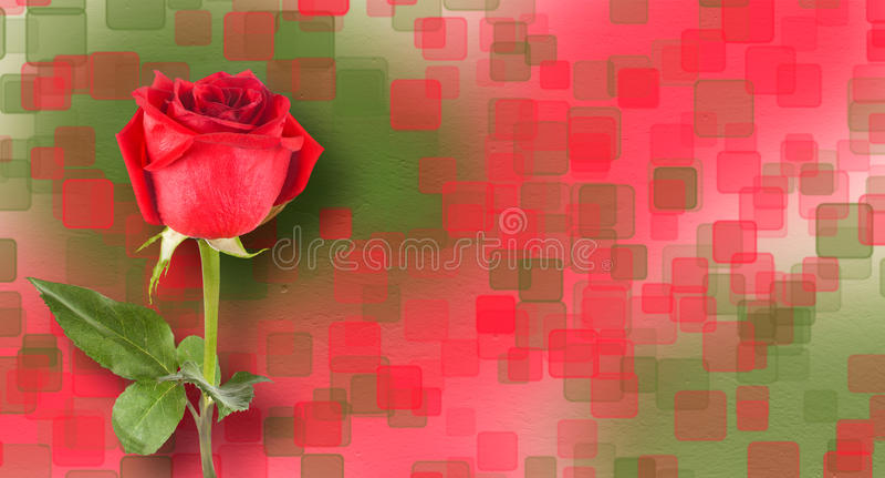 Букет красных роз с зеленым цветом выходит на абстрактную предпосылку стоковые изображения rf