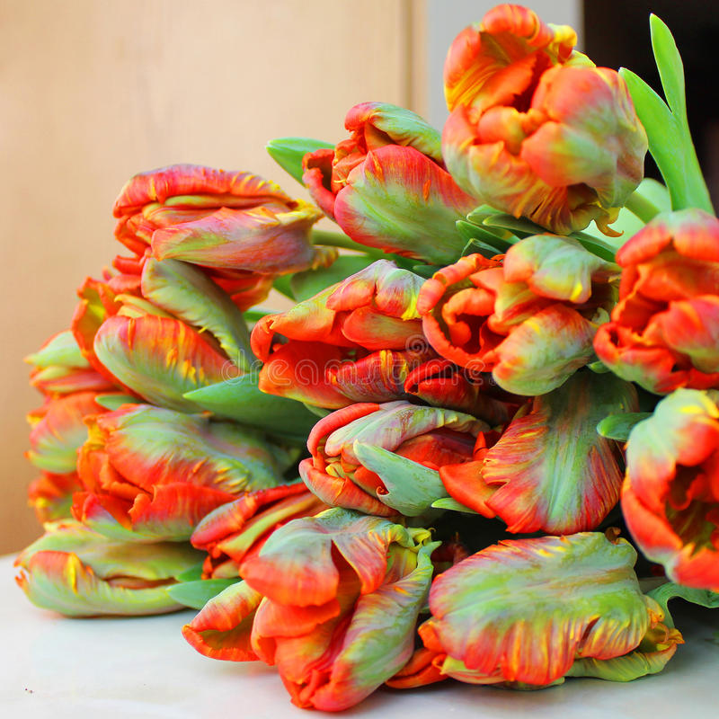 Букет красных тюльпанов стоковое фото