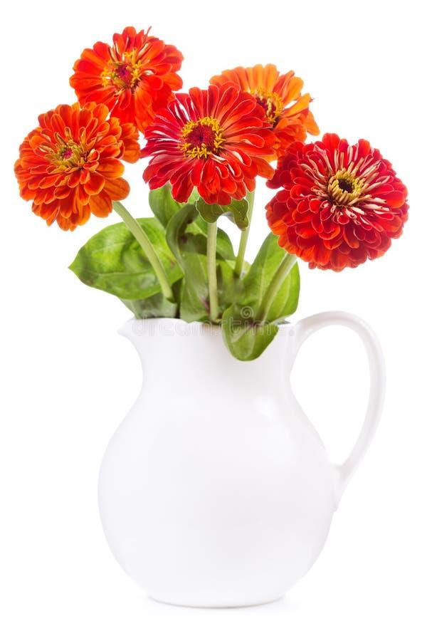 Букет красных цветков zinnia стоковые изображения rf