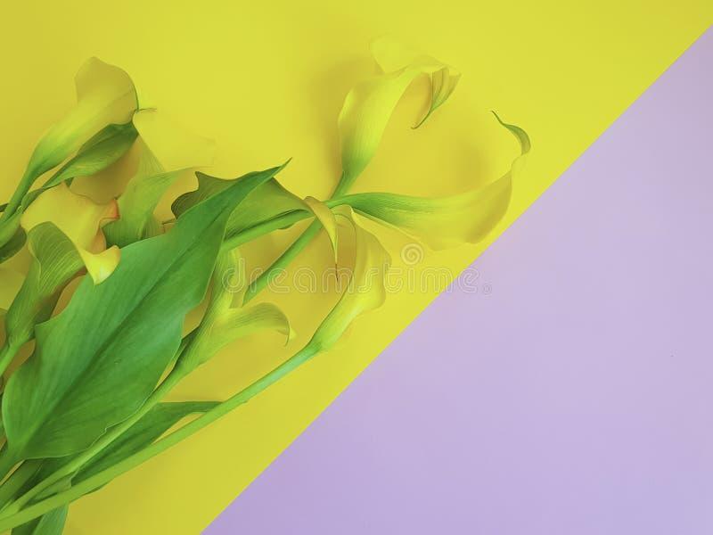 Букет лета нежности рамки предпосылки цветка покрашенный calla стоковые фото