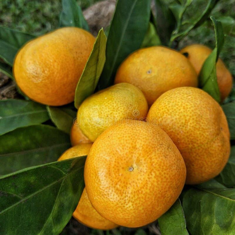 Букет мандаринов стоковая фотография