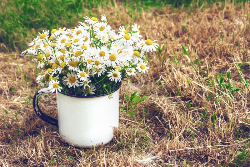 Букет маргариток на желтой траве Винтажный состав стоковые изображения