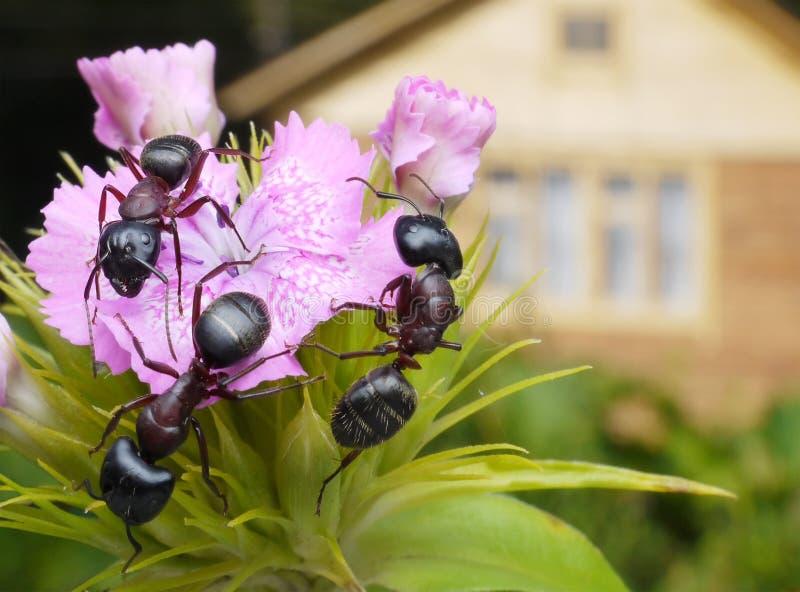 букет муравеев стоковое фото